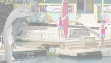 The Miami Seaquarium's Flipper's 50th/Flip it Forward Campaign Increased Social Media Followers, Created 12.1 Million Impressions